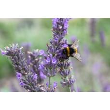 Пыльца цветочная 100г